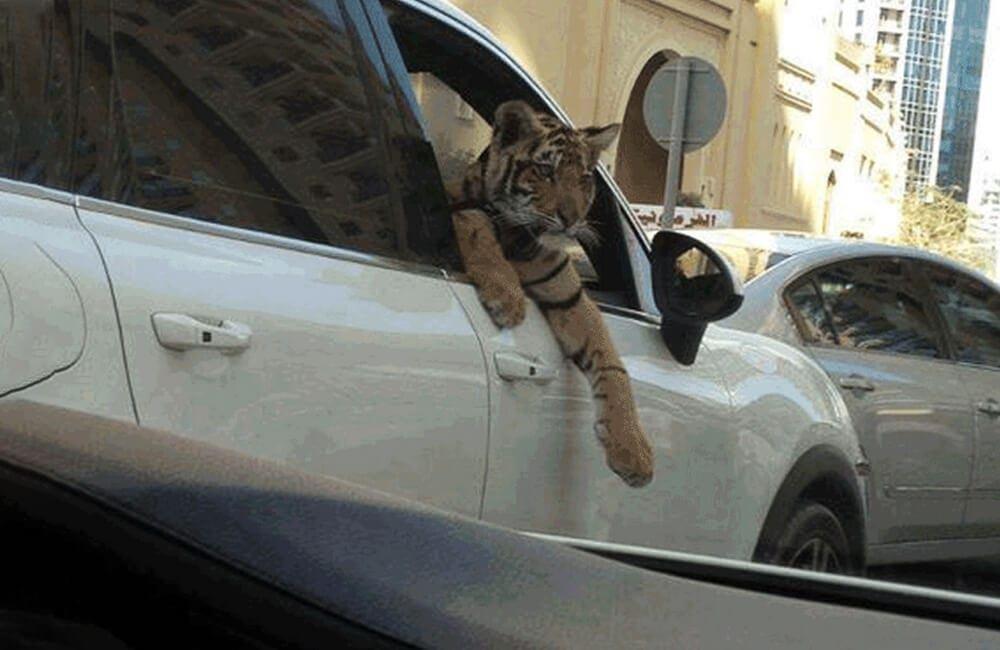 Cosas increíblemente caras que se encuentran solo en Dubái