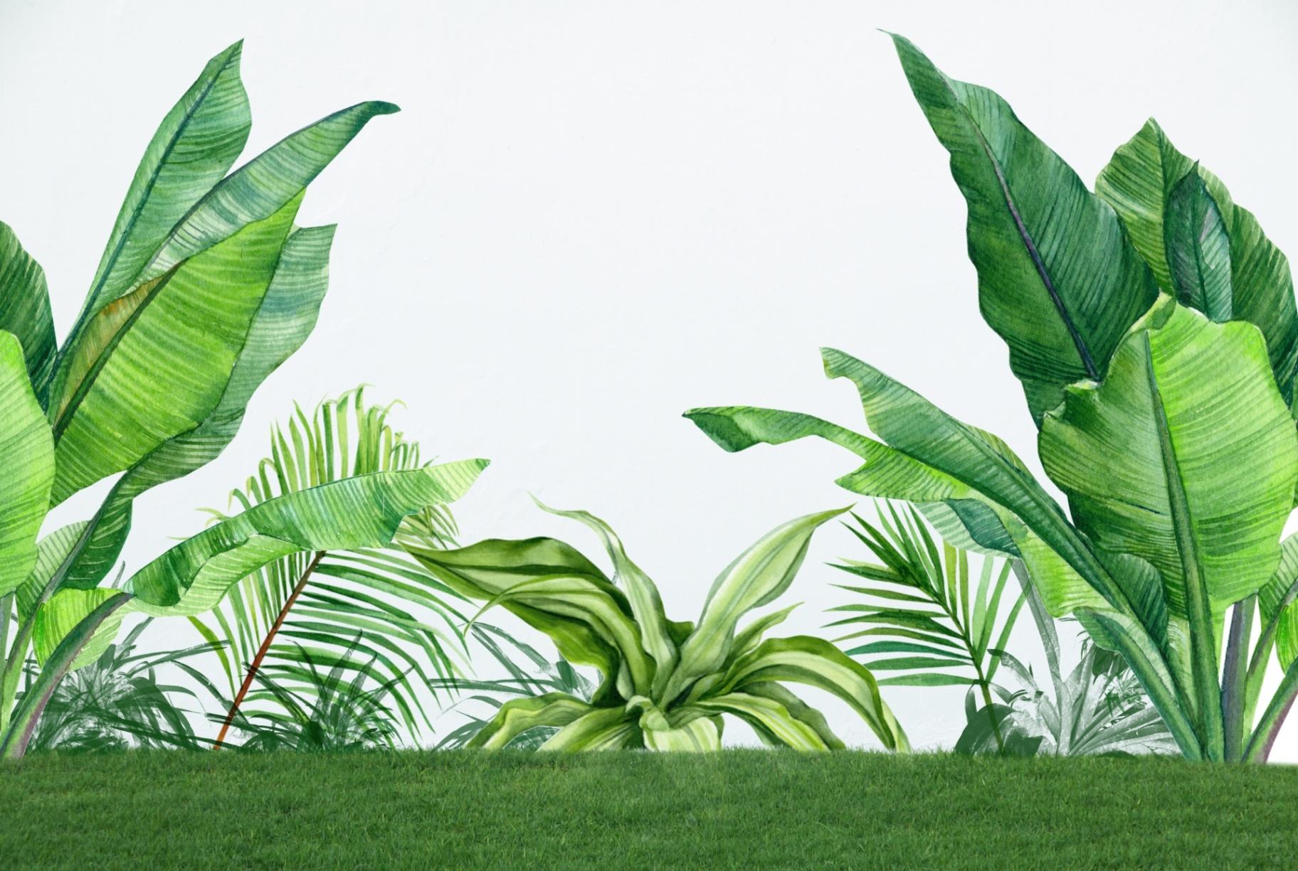 Las 9 plantas más exóticas y caras que puedes encontrar